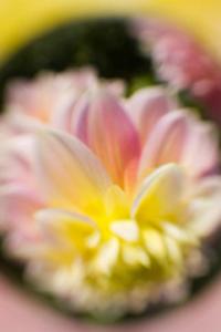 FLOWER IN CIRCLE for blackberry Screenshot