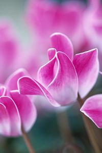 Beautiful Flowers for blackberry Screenshot